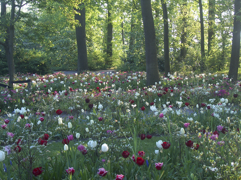The spring of 2005 showed a surprisingly different Keukenhof. New ...